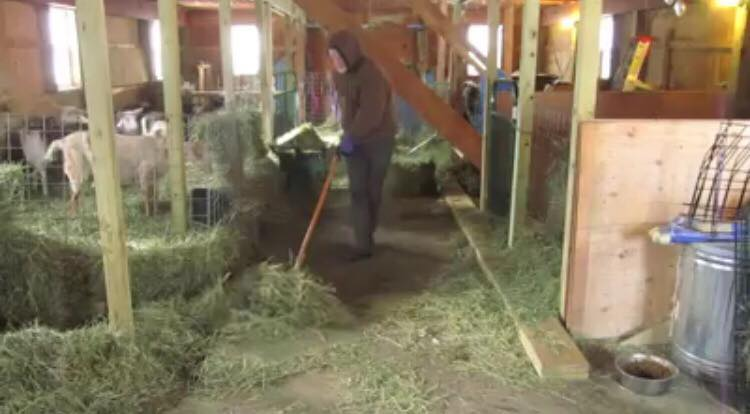 Landmand er gået viralt på de sociale medier - over 10 milioner mennesker hylder ham nu for hans livsbekræftende tiltag