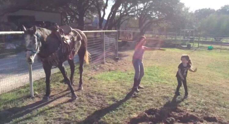 Børnene danser på græsset i hestefolden - så nu hestens utrolige reaktion