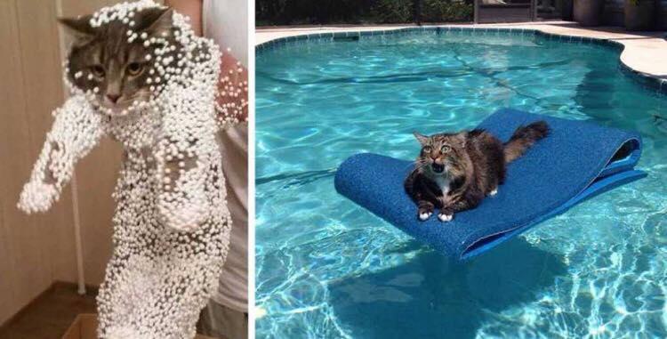 12 hylende morsomme billeder taget af katte, lige efter de har gjort noget yderst uheldigt