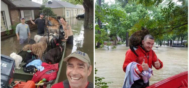 Redningsaktion efter den katastrofale orkan - disse helte begav sig ud for at redde alle de efterladte dyr