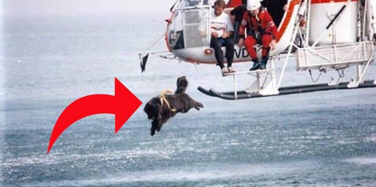 Hunden springer ud af helikopteren og ned i det store hav - årsagen er utrolig!