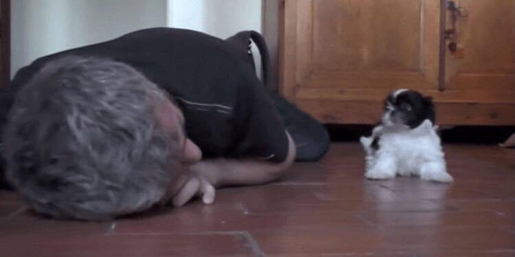 Ejeren lægger sig ned på gulvet - hvalpens hjertevarmende reaktion, har rørt millioners hjerter verden over.