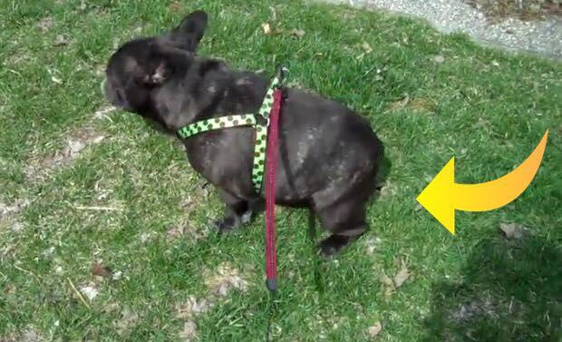 Ejer går tur med sin hund og der kommer en lyd- Hundens reaktion har fået flere millioner til at falde om af grin!