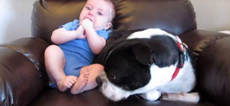 Baby skider pludseligt i bleen - se nu hundens vidunderlige reaktion, der har fået millioner til at vælte om af grin