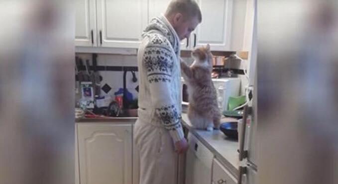 Har Fredrik måske den mest kærlige kat? Vurder selv i videoen, som er set af 3 millioner på Youtube