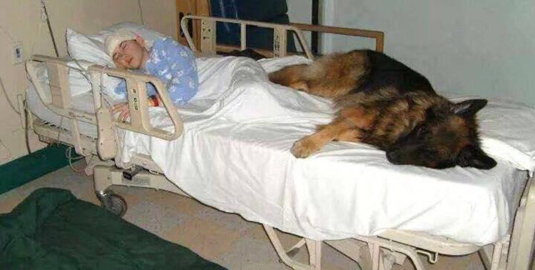 Hun havde blot én sidste ting at fortælle os inden sin død - med disse ord knuser hunden vores hjerter