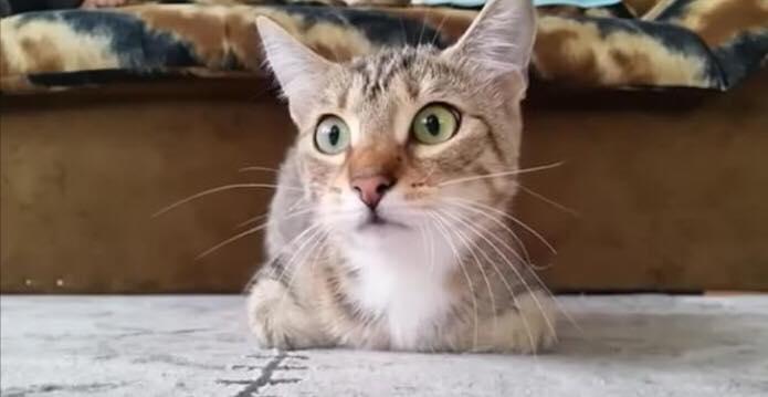 Ejer opdager killing ser gyserfilm - den uventede detalje får ham til at filme med det samme