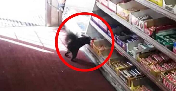 Egernet sniger sig hver dag ind i butikken - Så kigger medarbejderne nærmere og opdager deres store fejl