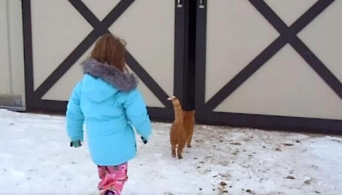 Lille pige følger efter katten ind i laden - bag den store port venter hendes livs største overraskelse
