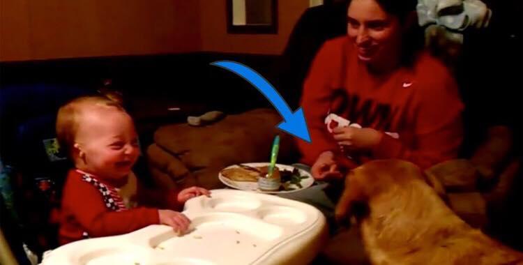 Babyen nægter at spise sine ærter - så kalder moren på familiens hund og får alle til at hylegrine!