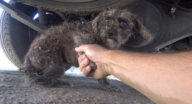 Hunden nægter at blive reddet - da den beskytter en stor hemmelighed
