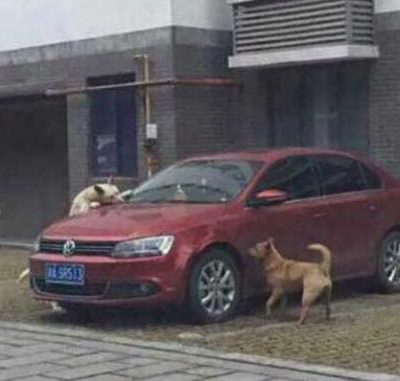 En flok hunde tager hævn over manden, der valgte at sparke en sovende hund på parkeringspladsen.