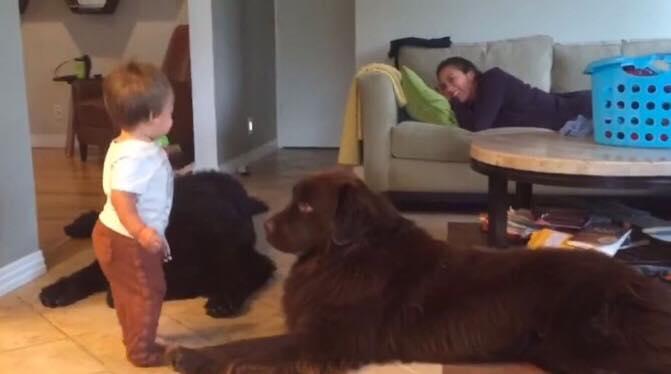 Lille Tegan læner sig frem mod den store hund, for at give den et kys - se så reaktionen, der nu har fået alle til at skraldgrine