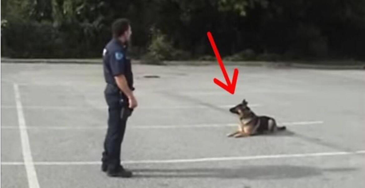 Betjenten