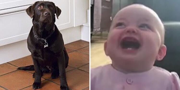 Babyen ser hunden får popcorn - hendes reaktion er nu gået viralt