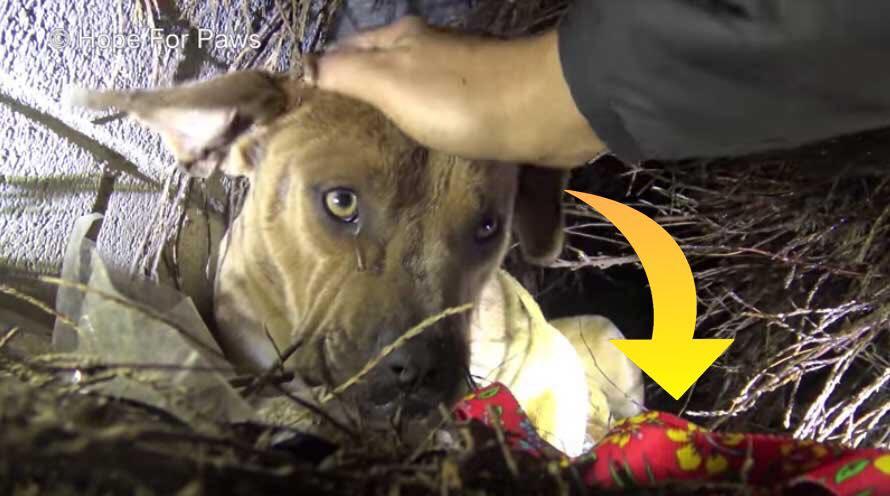 Hjemløs hund og nyfødte hvalpe reddes fra stormfuldt regnvejr - sådan ser de ud i dag