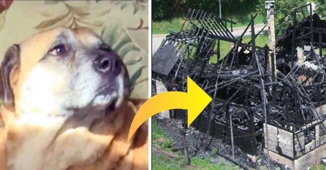 Hunden reddes ud af det brandene hus - 2 måneder senere leder den sin ejer med hen til et sort hul i det nedbrændte hus