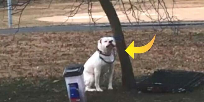 Hund efterladt i parken med sin mad og legetøj - så finder kvinden en seddel og indser det forfærdelige