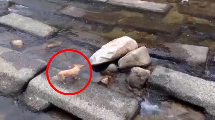 Forbipasserende opdagede hund opfører sig hysterisk morsomt - dette var hvad vedkommende fangede på film