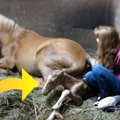 Hesteejer