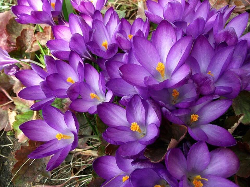 Tricket der giver dine blomster et pift til foråret - sådan gør du:
