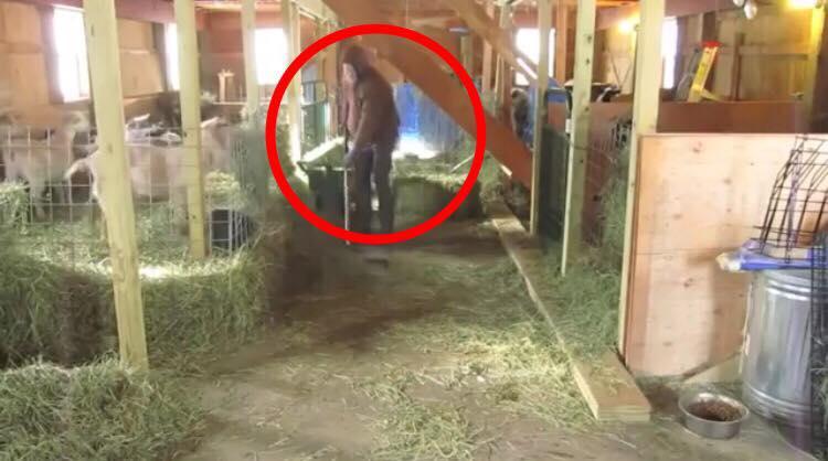 Landmanden gør noget uventet i laden - Nu elsker hele verden ham