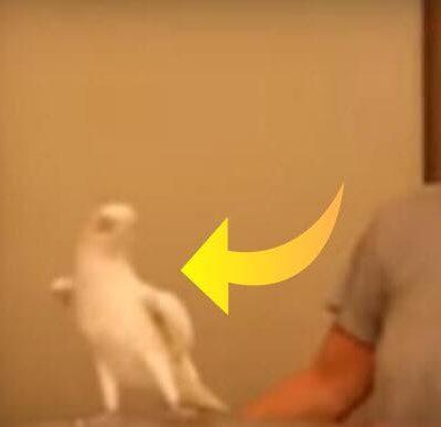 Ejeren danser 'Lambada', men papegøjen stjæler al opmærksomheden