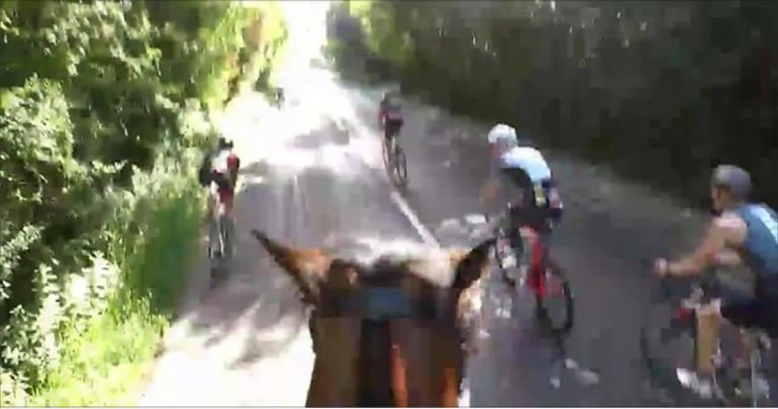 Cyklisterne