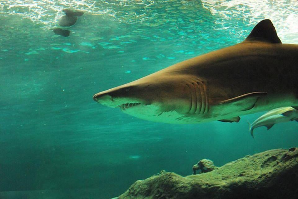 Chokerende fund: Stor haj fundet ved Vestkysten