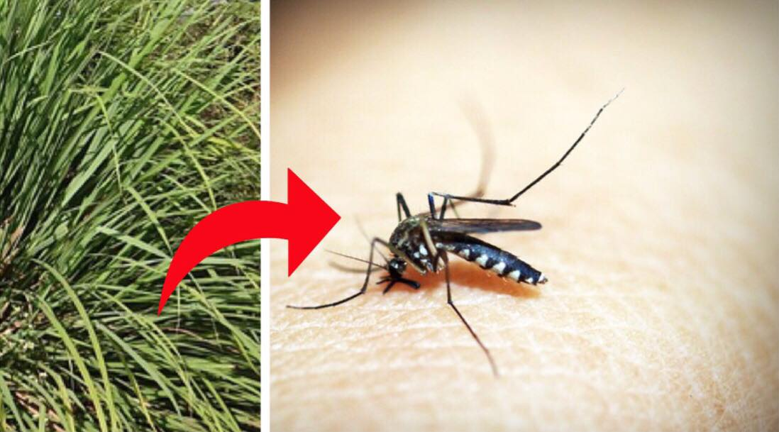 Genialt tip: Sådan slipper du for myg og de irriterende myggestik der følger med