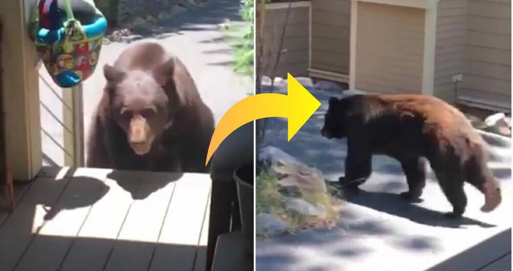 Brun bjørn kommer på uventet besøg hos familie - bjørnens reaktion er nu gået viralt