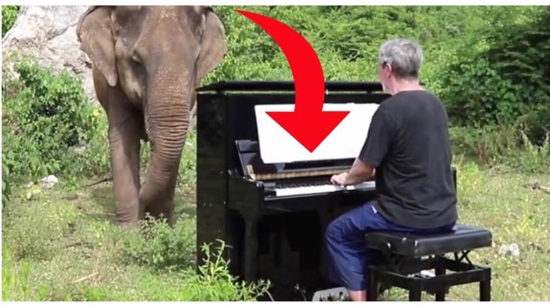 Se øjeblikket hvor mand spiller klaver for gammel og blind elefant - Reaktionen er yderst rørende