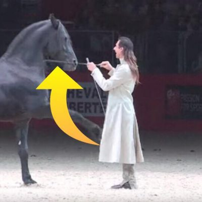 Han skaber et utroligt show med sine tre heste - publikum jubler over magien der opstår