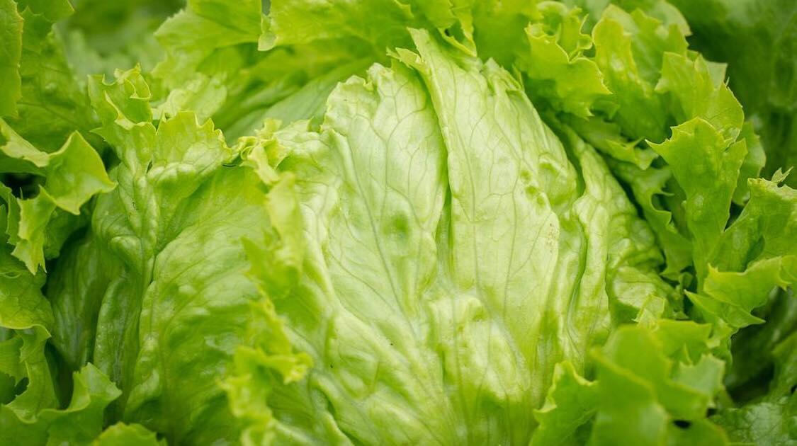 Genialt trick: Sådan fjerner du stilken på dit salathovede på blot 3 sekunder!