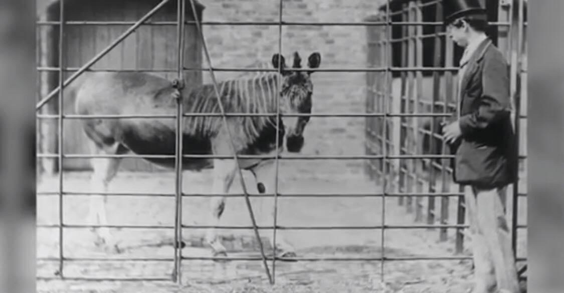 Chokerende: 10 dyrearter der nu hører fortiden til på grund af mennesket