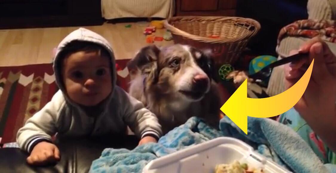 Moren vil have sin søn til at sige ''mama'' - Hundens reaktion har nu fået millioner til at grine!