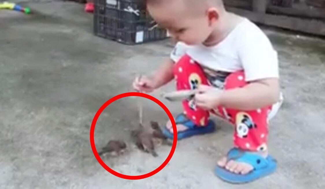 Lille dreng fodre fugle - drengens følsomme adfærd har nu fået videoen til at gå viralt