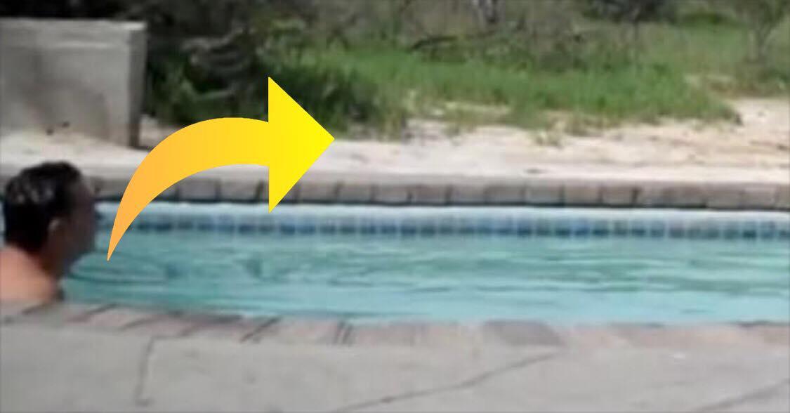 Han fik lyst til en dukkert i swimmingpool - få sekunder senere får han sit livs chok!