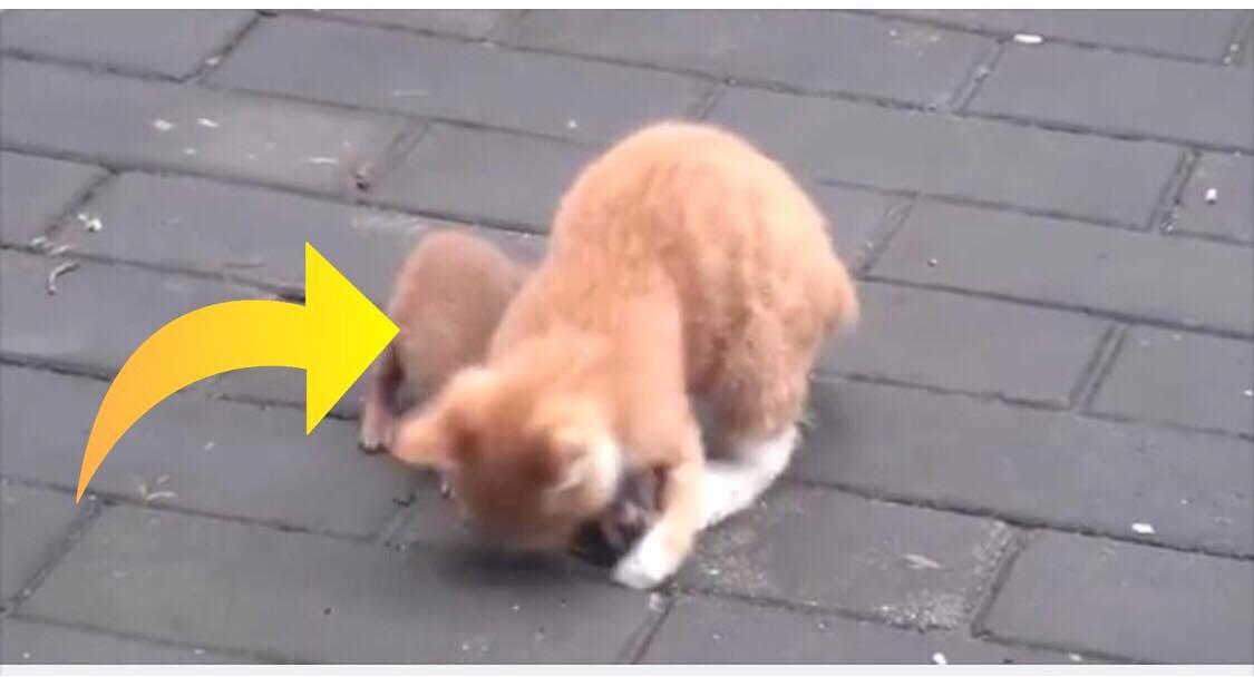 Kat leger med sin uventede bedste ven - nu er deres hjertevarmende leg set af millioner verden over