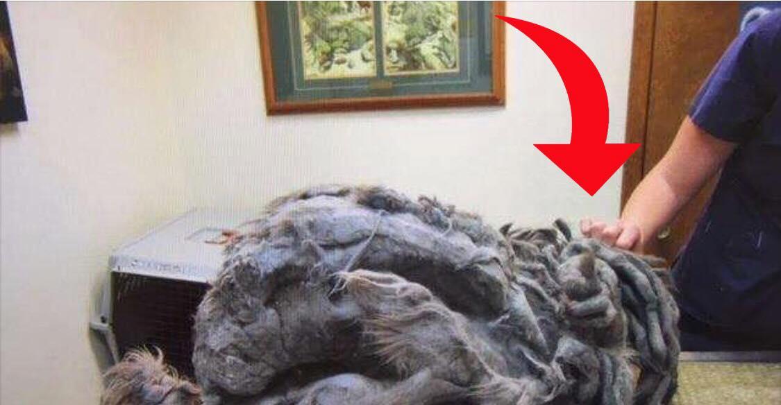 Mystisk dyr efterladt foran dyreværn - Personalet chokeres af synes da de opdager hvad det egentlig er