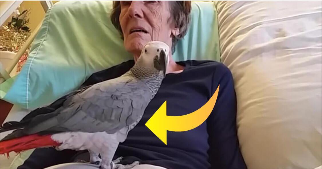 Døende ejer og papegøje tager afsked efter i alt 25 år sammen - se den rørende reaktion her
