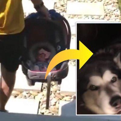 Hunden skal for første gang møde familiens nyfødte lille pige - se reaktionen i den hjertevarmende video