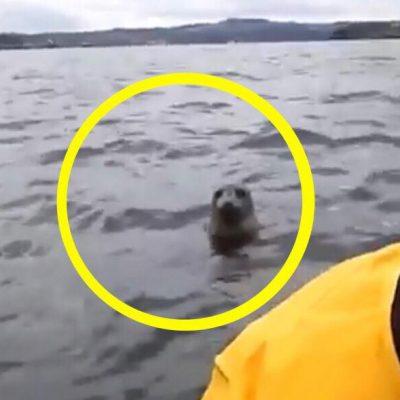 To kajakker får øje på en sæl i vandet - få sekunder senere sker det utrolige
