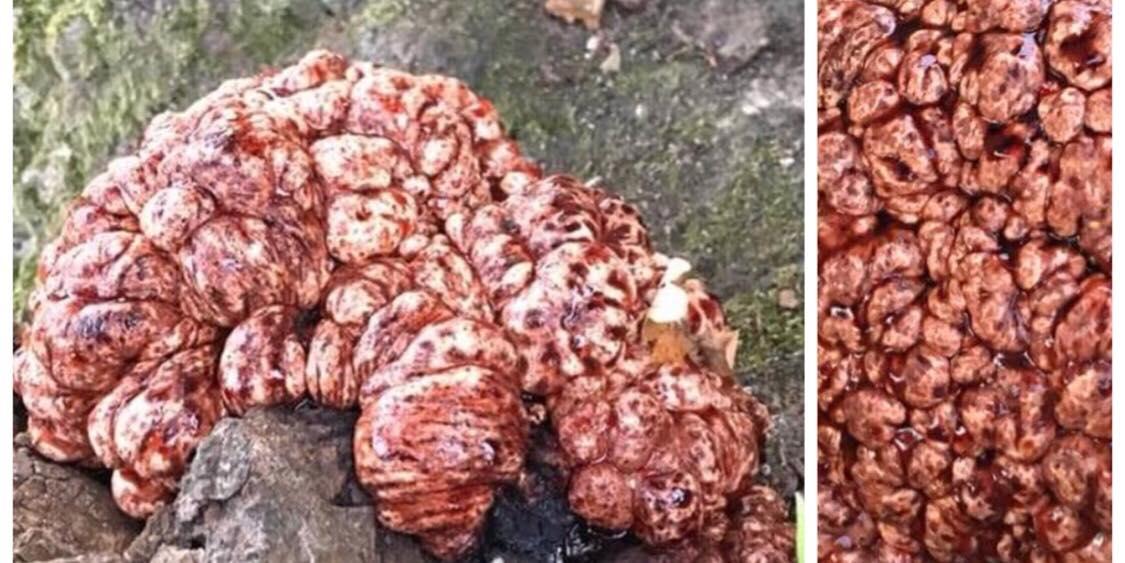 Dansk kvinde ude at gå tur med sin hund - opdager noget yderst mærkeligt klæbet fast til træ