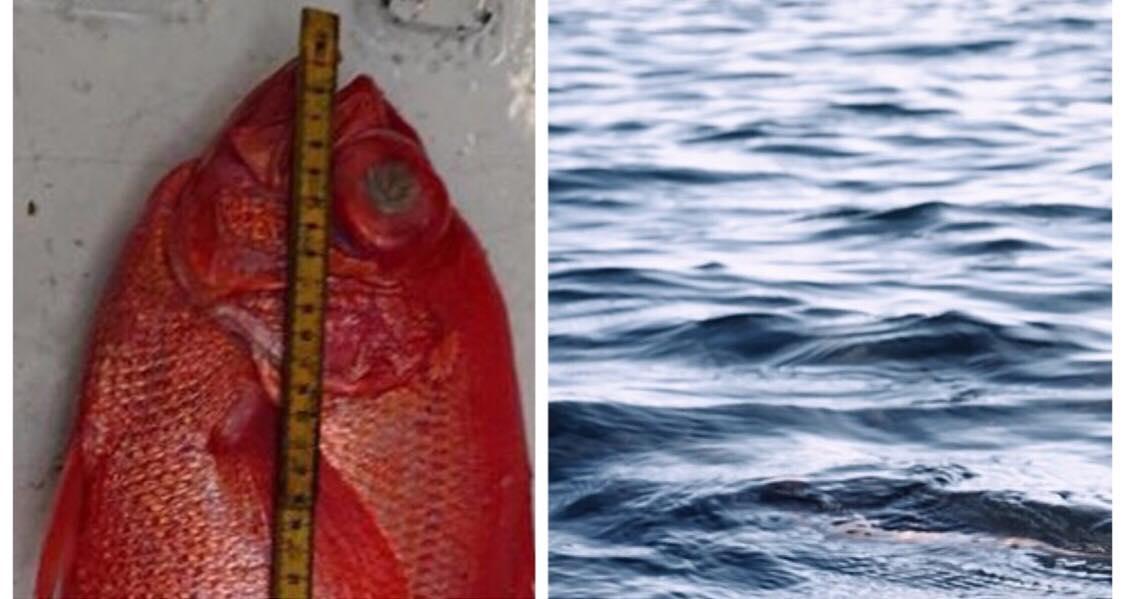 Fisker chokeres over sjælden fangst: Det er kun tredje gang på 65 år at denne art er dokumenteret i Danmark