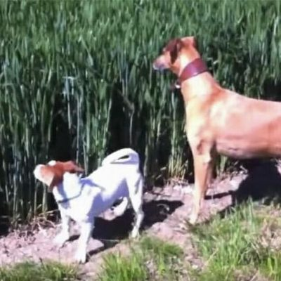Familiehunden