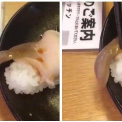 Gæsten sidder på restaurant og er klar til at spise sushi - pludseligt er der noget på tallerkenen der bevæger sig