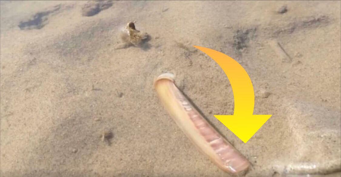 Han finder en musling i vandkanten - bliver vidne til noget helt utroligt