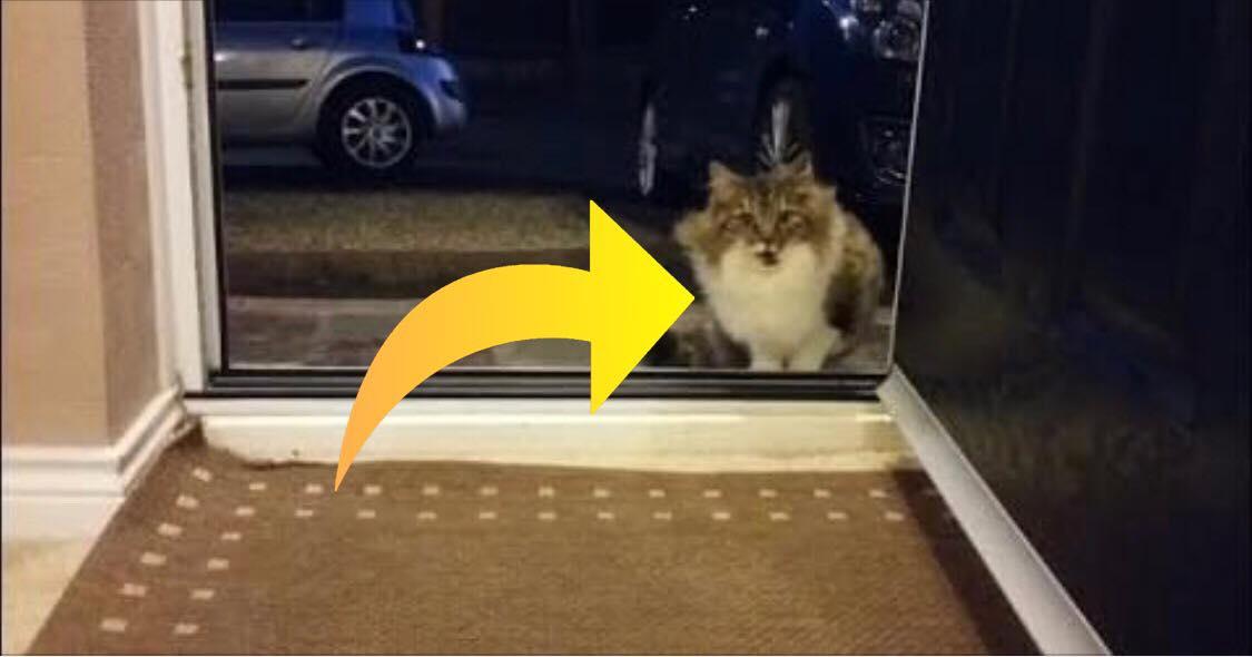 Hjemløs kat sidder ved mandens hoveddør - da han åbner døren indser han straks at den ikke er alene
