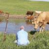 Han filmer køer på en mark – indser pludselig en desperat ko mure efter HJÆLP!